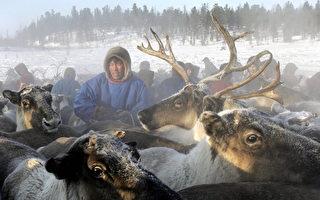 """俄科学家发现 动物在冬天""""酿酒""""以抗严寒"""