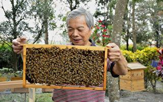 拯救生态浩劫 农场开启养蜂A计划