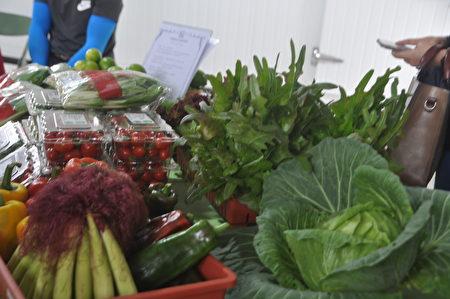 """中央与花莲县府共同合作,26日在花莲寿丰乡""""溪畔联合有机农场""""展开有机农特产的行销通路及种植特色蔬菜展示等,期望消费者都能认识花莲A+等级有机蔬果。"""