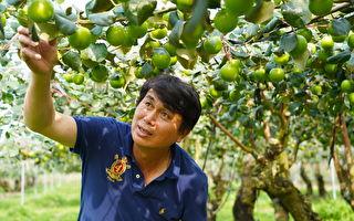 进军国际 农粮署辅导GLOBALG.A.P.验证