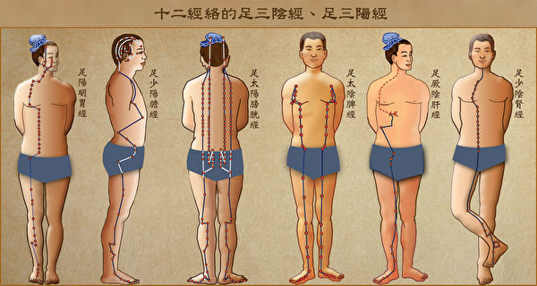 十二经络中的足三阴经(胃、胆、膀胱)和足三阳经(脾、肝、肾)。