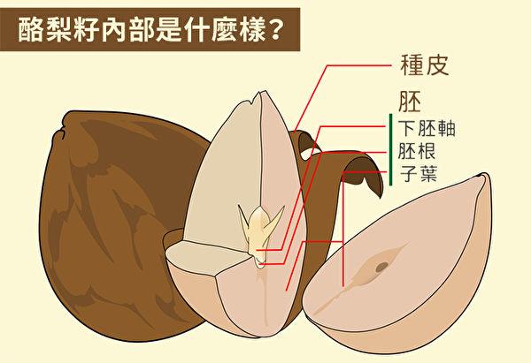 酪梨籽营养丰富,有助于抗老化、减肥。