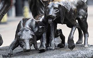 是狗狗还是铜雕?专家:原始犬种超聪明