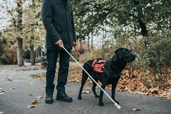 優步司機涉拒載盲人及導盲犬被控