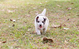 比赛半途救幼犬 马拉松女选手抱狗跑30公里