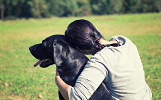 她腦中風癱倒 兩忠犬衝出求援 救主一命