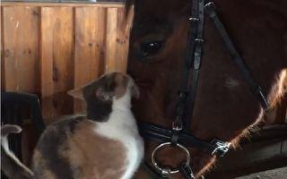上辈子是恋人?独行侠猫咪和马儿黏踢踢