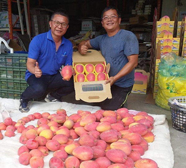 屏东农民有创意 芒果种出来有吉字