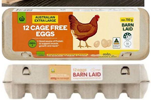 維州農場病雞感染沙門氏菌 全澳召回雞蛋