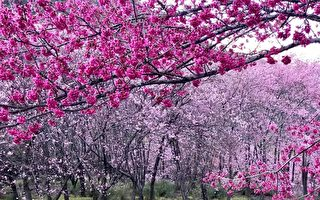 台湾古典诗:春游(二)