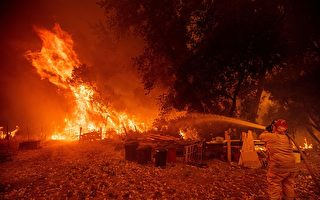 防野火 加州终于要清理森林了