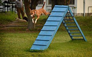 被爱心警察收留和培训 流浪狗变优秀缉毒犬