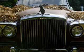 被遺忘車庫31年 二戰老兵的老爺車身價不菲