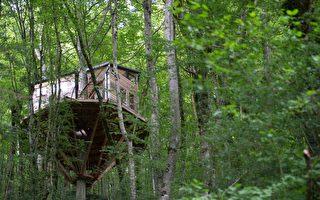 森林樹屋成最火熱Airbnb 預訂隊伍排到十月
