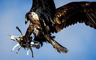 「大自然戰勝科技」 老鷹抓無人機照片走紅