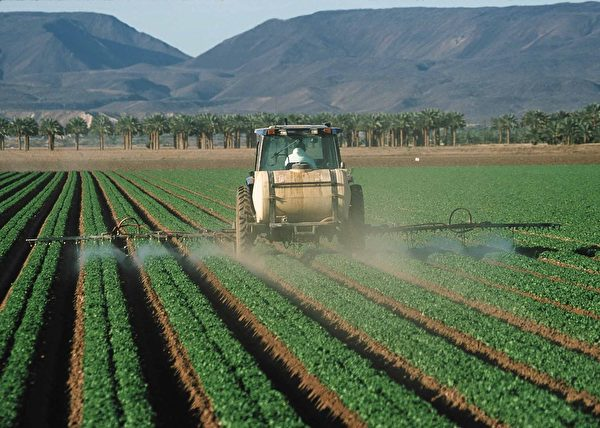 專家普遍認為,大面積施用農藥是蜂群驟減的最致命因素。(公有領域)