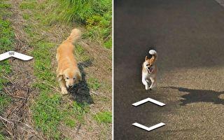 组图:街景视图留可爱身影 狗狗让小岛变热搜