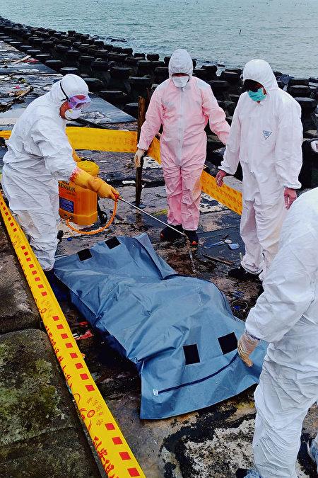 台湾马祖海漂猪尸 验出非洲猪瘟病毒