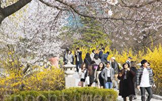 組圖:高陽一山湖水公園百花盛開春意濃