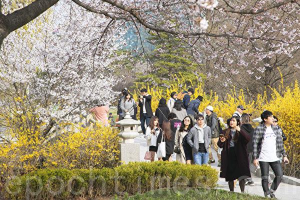 组图:高阳一山湖水公园百花盛开春意浓