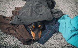 主人走6年 小狗见到旧衣物 反应让人鼻酸