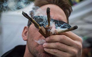 """""""4.20""""将至,每年在温哥华日落海滩公园(Sunset Beach)举行的非法大麻集会也将卷土重来。(加通社)"""