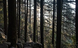 印度村庄组娘子军 捍卫森林20年