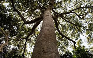 巴西摄影师花20年种200万棵树 荒地变绿林