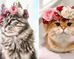 (leo.mainecoon/Instagram, maple.cat/Instagram,Courtesy of Freya's Floral Company)