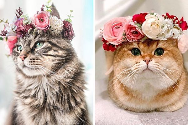 (leo.mainecoon/Instagram,maple.cat/Instagram,Courtesy of Freya's Floral Company)