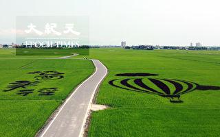 冬山乡三奇稻间美径系列自行车轻旅行开跑