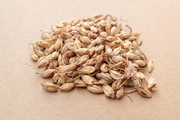 麦芽能疏肝理气,可治肝气郁滞所引起的脂肪肝。(Shutterstock)