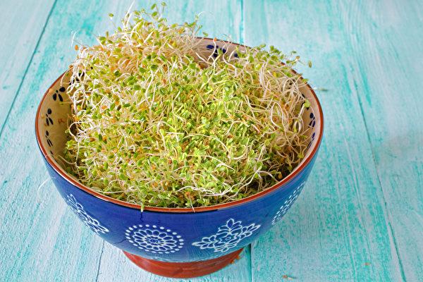 紅三葉草(red clover,又名紅花苜蓿)芽菜是植物雌激素的重要補充來源。(shutterstock)
