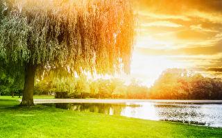 柳林中的風聲(1)