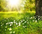 台湾古典诗:春愿