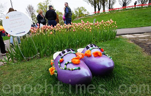 美国荷兰市国际郁金香节 美不胜收