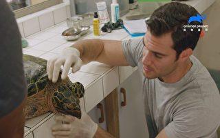 《獸醫伊凡最野性》勇闖荒野 拯救瀕臨絕種龜