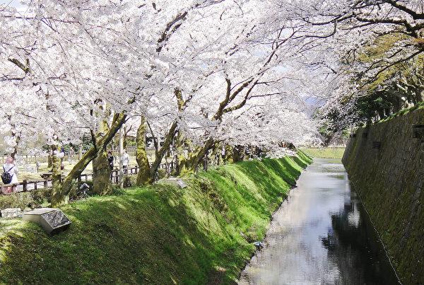 日本金泽城外护城河边的樱花。(蓝海/大纪元)