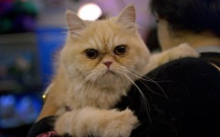 如何正确和安全地抱猫? 专家告诉你