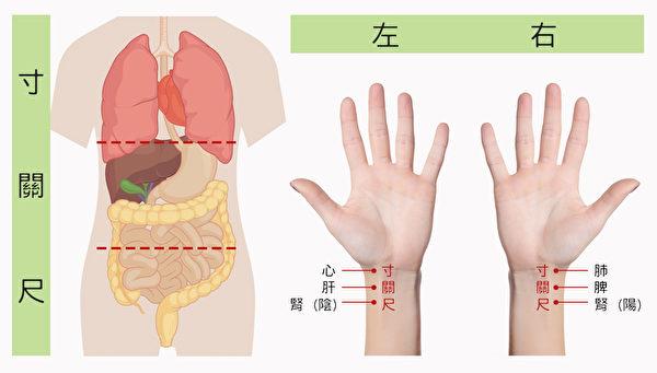 把脈時,搏動力度最大的點對應的就是氣血郁滯的地方。(Shutterstock/大紀元製圖)