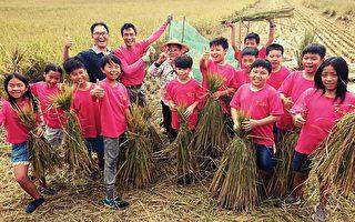割稻打穀自己來 小學生體驗「粒粒皆辛苦」