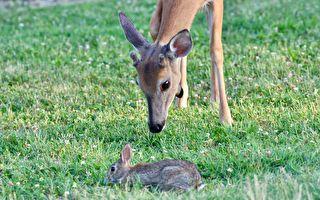 """""""小鹿斑比""""成真!野鹿与宠物的友情如童话"""