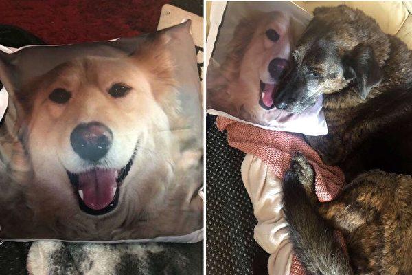 希望史賓塞可以從洛基的抱枕和家人的愛護中得到失去弟弟的安慰!(Courtesy of Beth Fisher)
