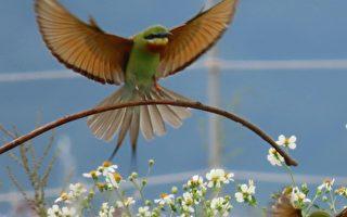金门赏鸟 摄影师分享拍摄鸟类丰富生态趣事