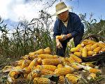 中國各地上演「搶糧大戰」 玉米價格創4年來新高