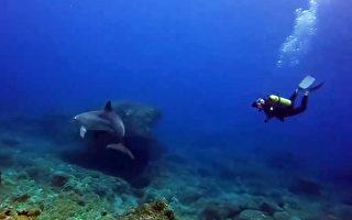 意外人豚共游 女潜水客惊呼吃素2年值得
