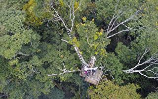 揭樹冠層神秘面紗 《聖稜樹冠》獲國際多獎