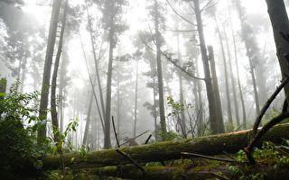 台灣秘境:石梯嶺步道