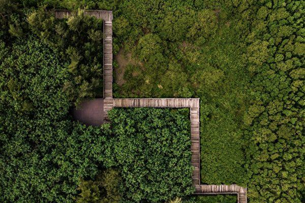 新丰红树林
