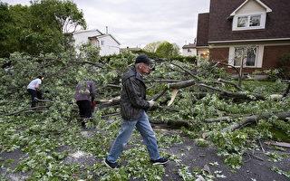 屋頂掀翻 大樹連根拔起 渥太華地區遭遇龍捲風